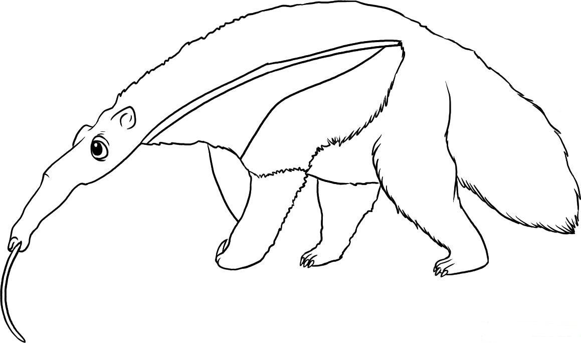 Anteater Coloring Child