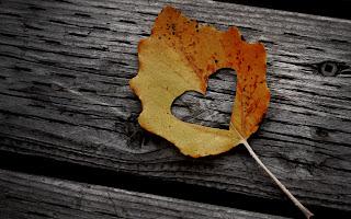 Mood Macro Leaf Heart Photo HD Wallpaper