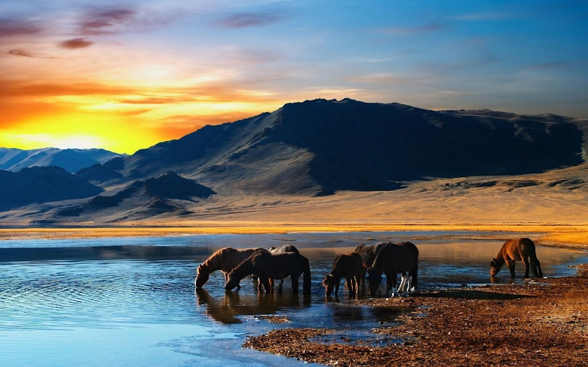 Horses Drinking Water Widescreen HD Wallpaper