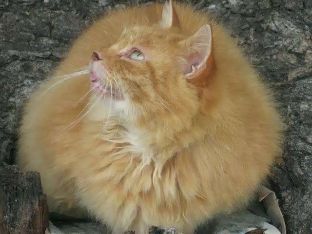 бездомный рыжий кот