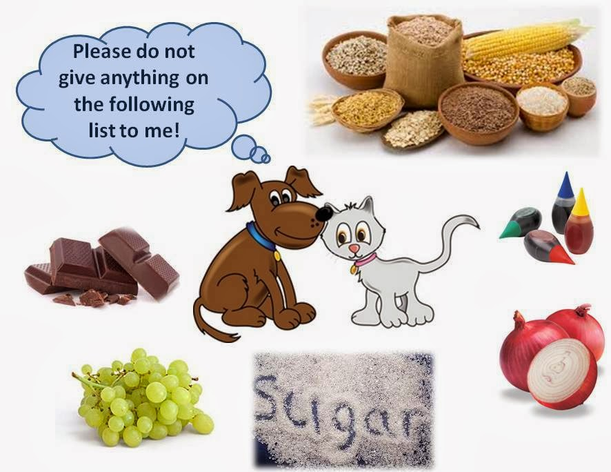 Is Cat Food Harmful For Dogs To Eat