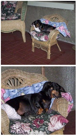 A Favorite Place to Sleep was on the Screen Porch in Her Little Wicker Chair
