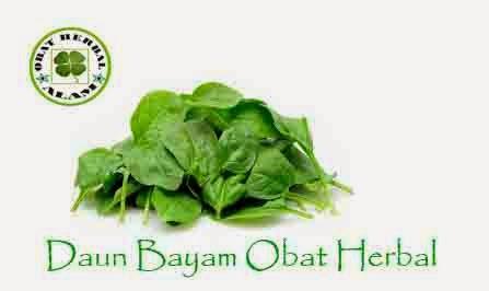 manfaat, khasiat, obat herbal