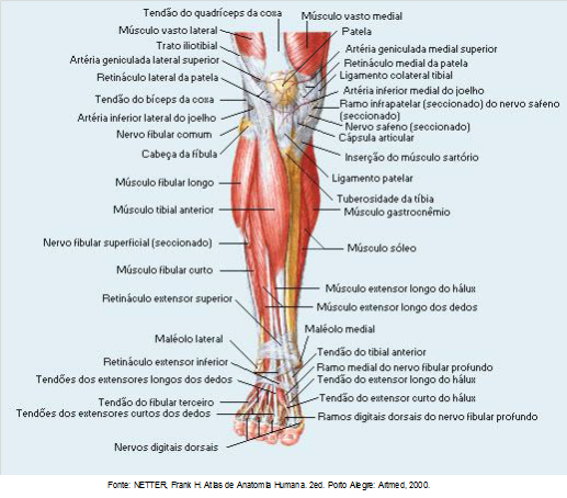 Anatomia Pé 1 | Osteopatia