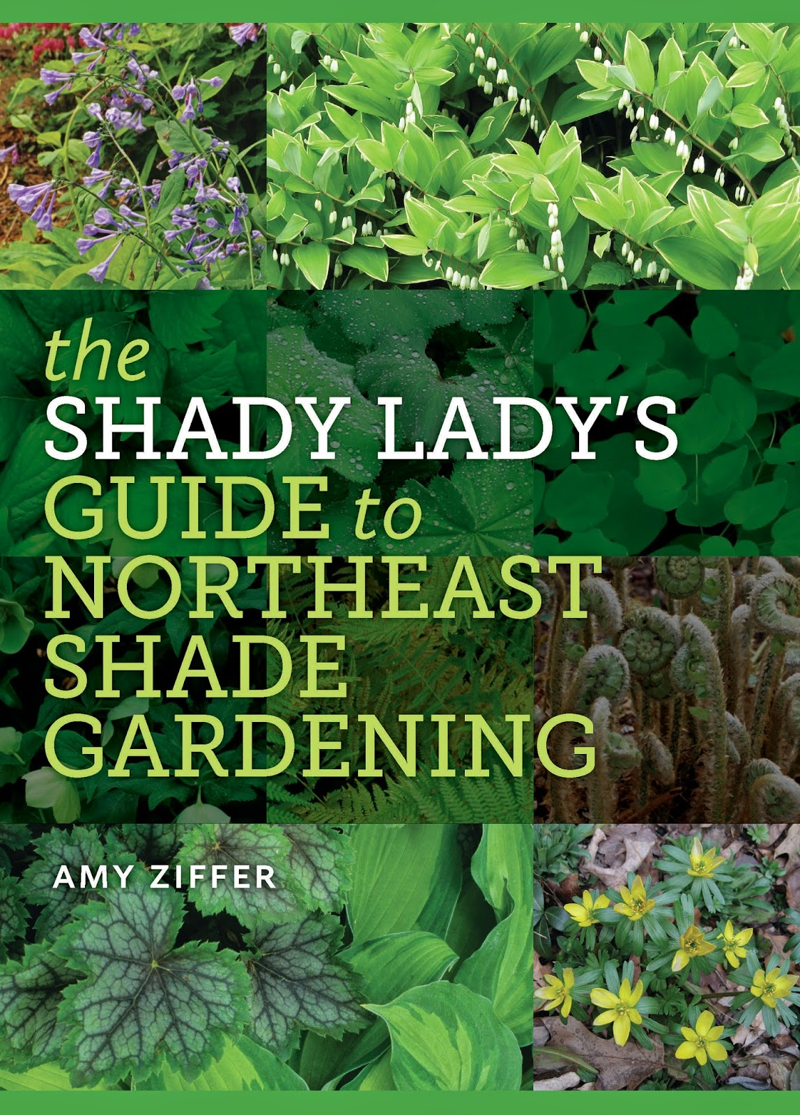 This Problem Is Never More Evident Than To The New England Gardener. Many  Gardens In These Parts Feature Expanses Of Unwelcome Shade, Because Yards  Are So ...