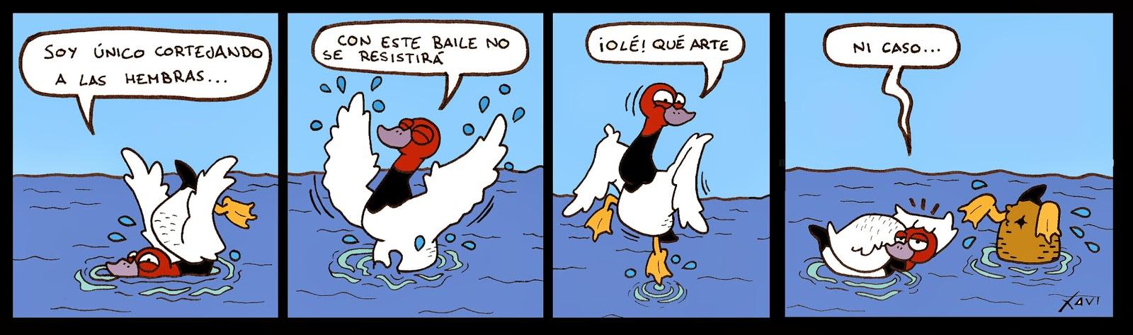 Tiras cómicas aves