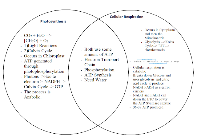 essay on photosynthesis and cellular respiration