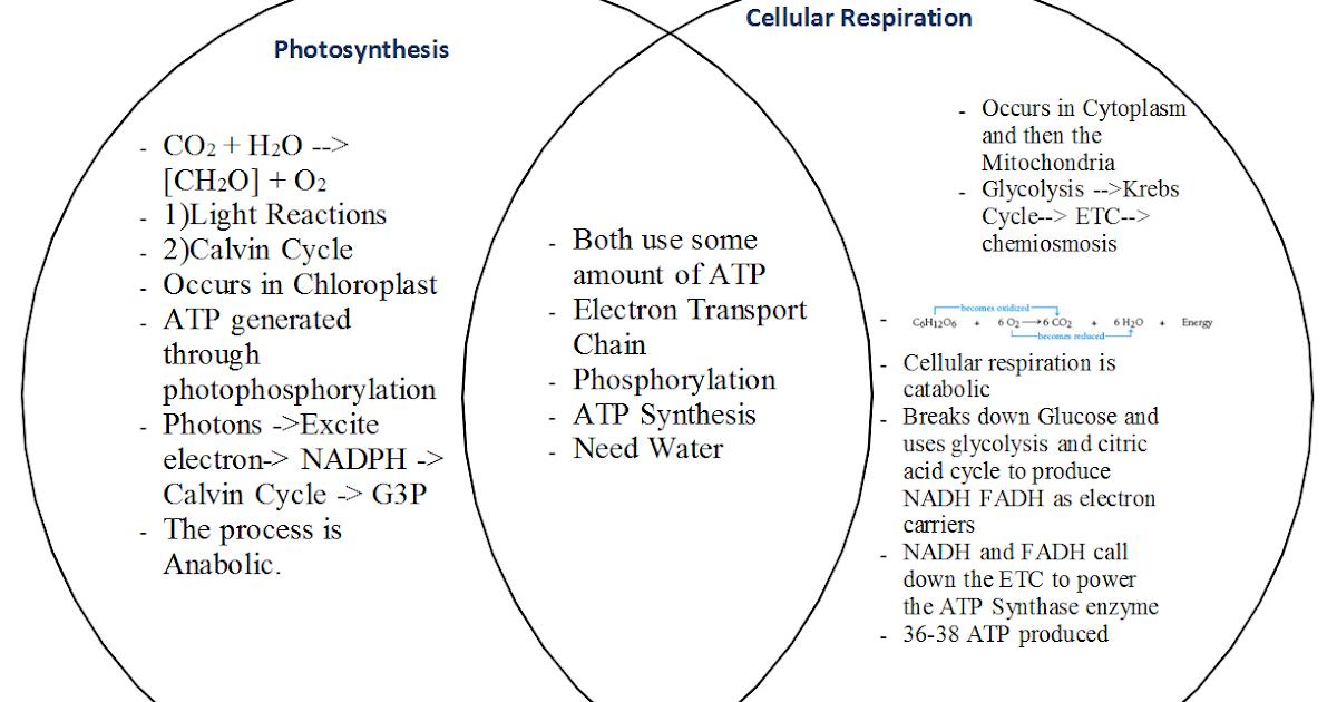 sean nguyen biology ap blog  photosynthesis and cellular