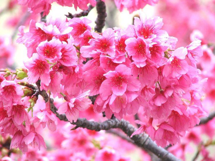 Ilkbahar ilkbahar fotoğrafı ilkbahar resimi ilkbahar resimleri