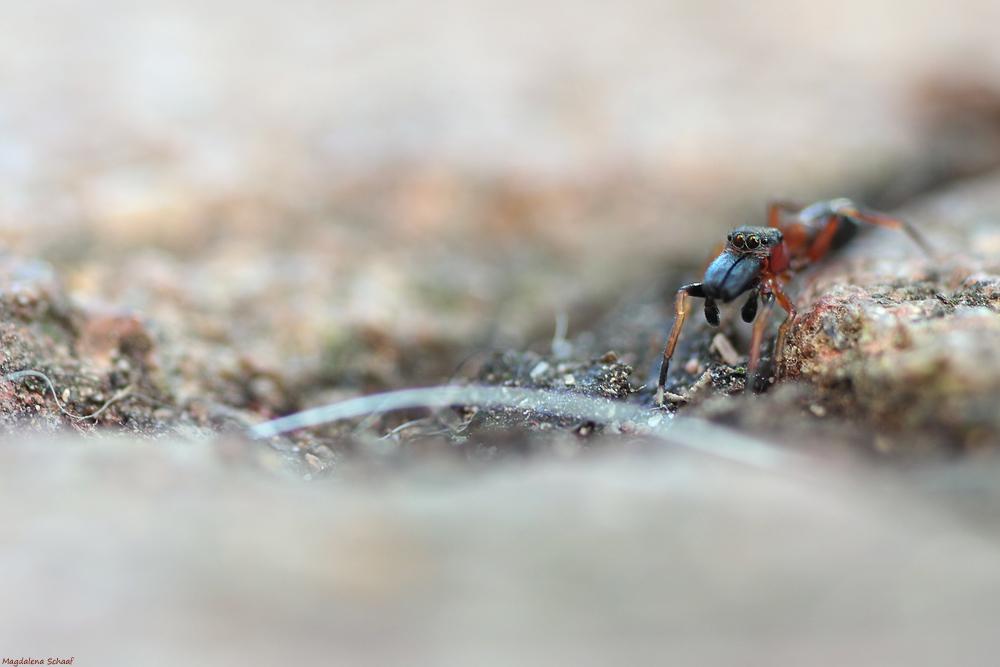 Am wegesrand ist das eine ameise - Ameisen in der wand ...