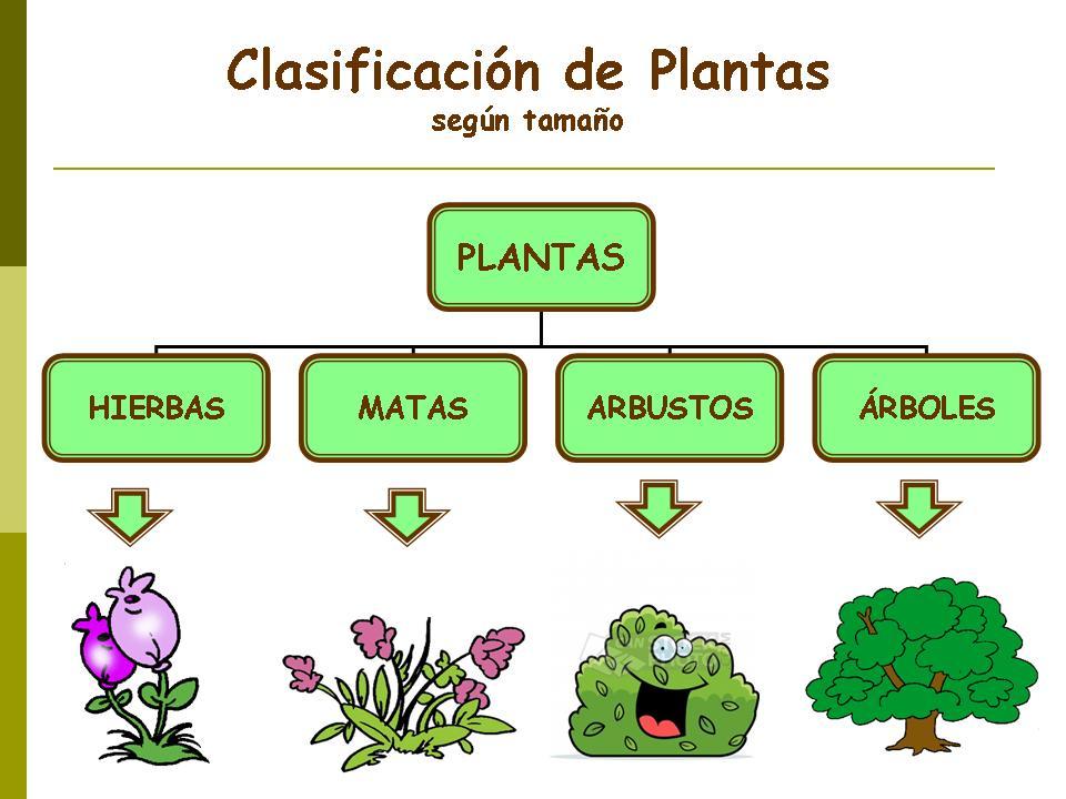 Cuál es la diferencia entre árboles y arbustos?