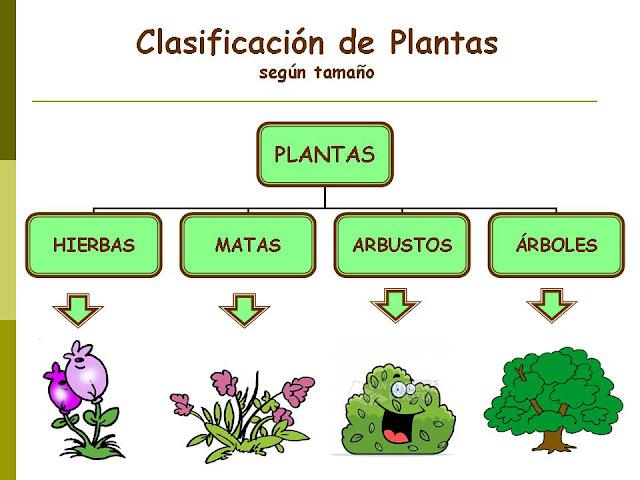 Hay tres grandes tipos de plantas dependiendo del tamaño de éstas