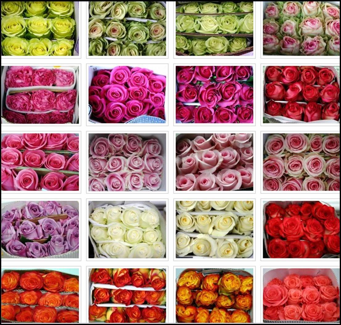 Jenifer n ez decoraci n bodas eventos significado de - Significado colores de las rosas ...