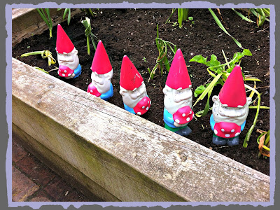 Gnomes in a queue