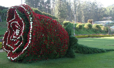 Flower show at Ooty 2011 Photos