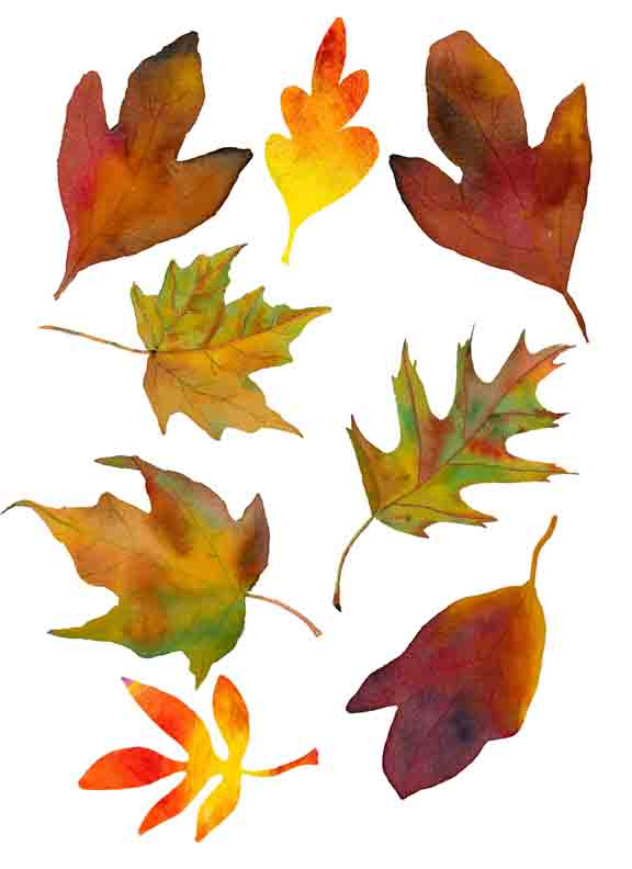 Wild image throughout autumn leaves printable