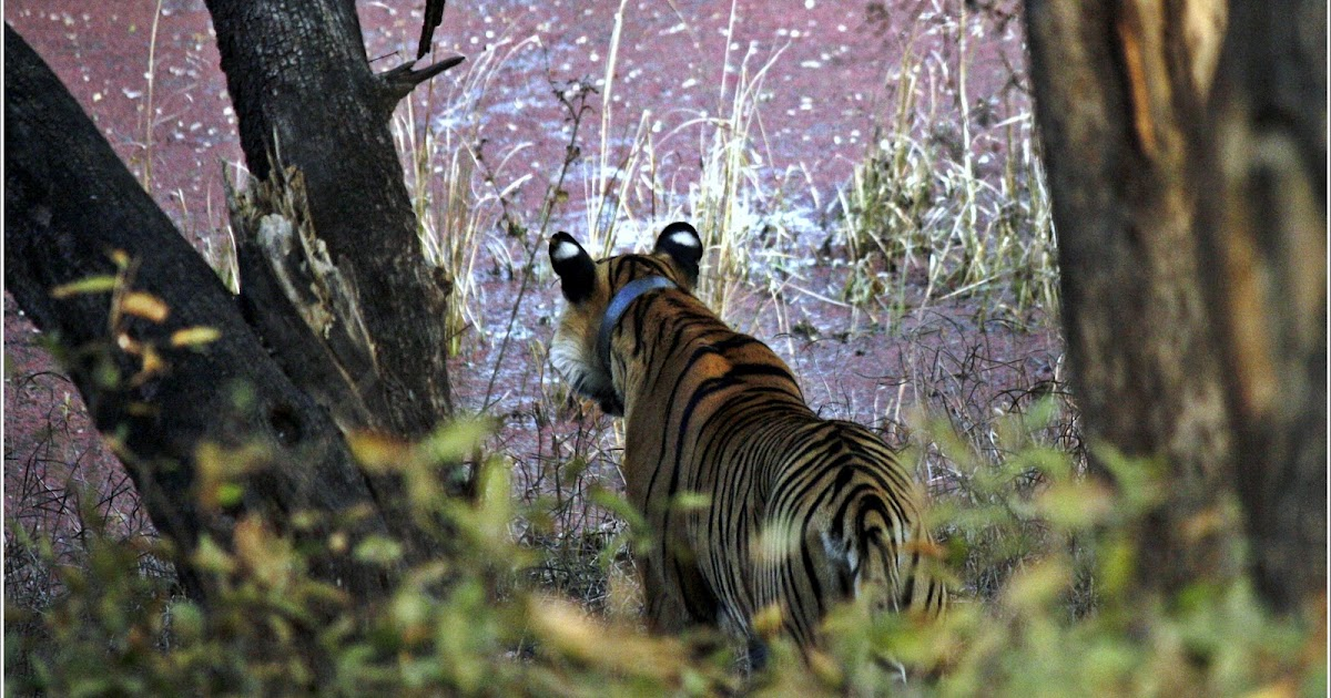 wildlife of india an introduction List of wildlife sanctuaries in jammu and kashmir  introduction wildlife sanctuary  state wise list of wildlife sanctuaries of india.