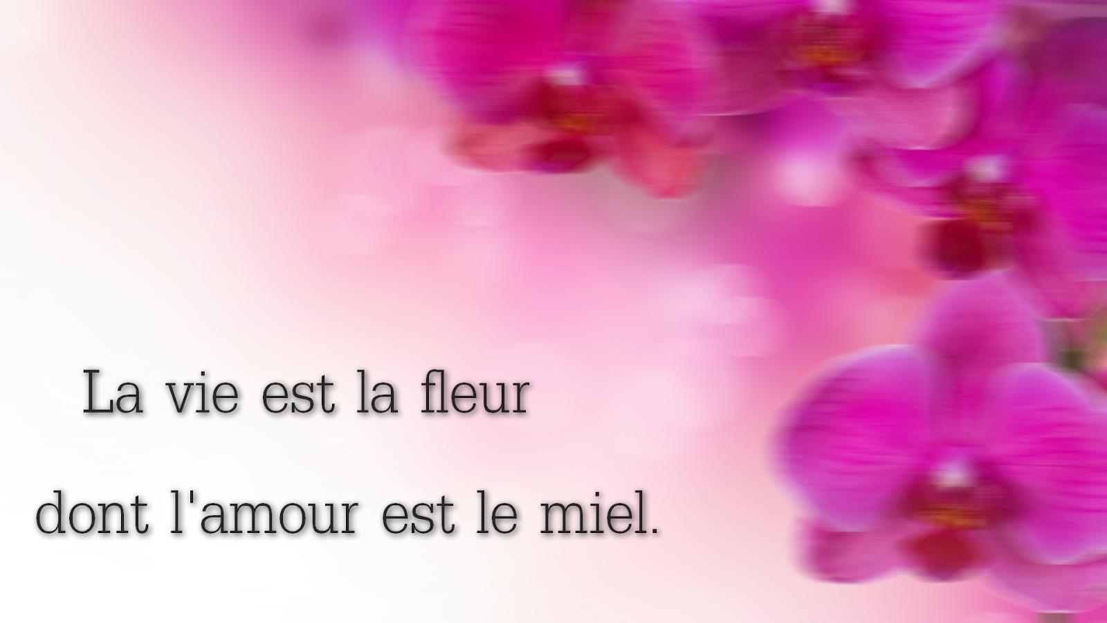 citation amour vie