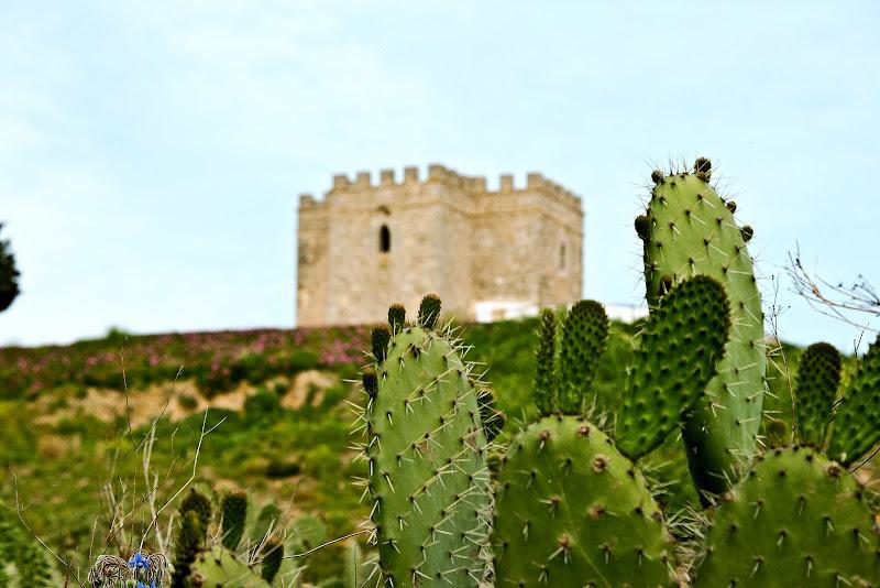 Chumberas. Al fondo, la Torre de Doña Blanca