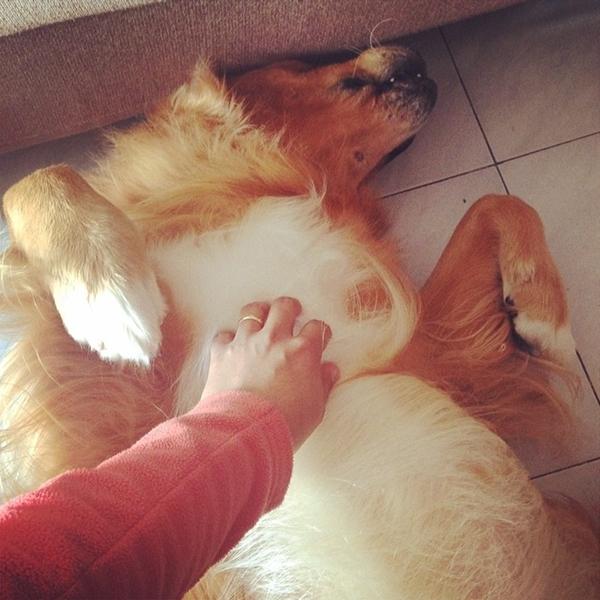 cachorro recebendo carinho