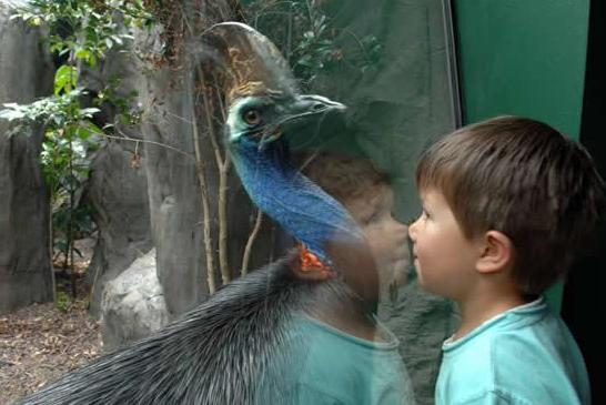 burung kasawari