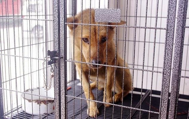 un perro sobrevive tras ser atropellado y quedar atascado