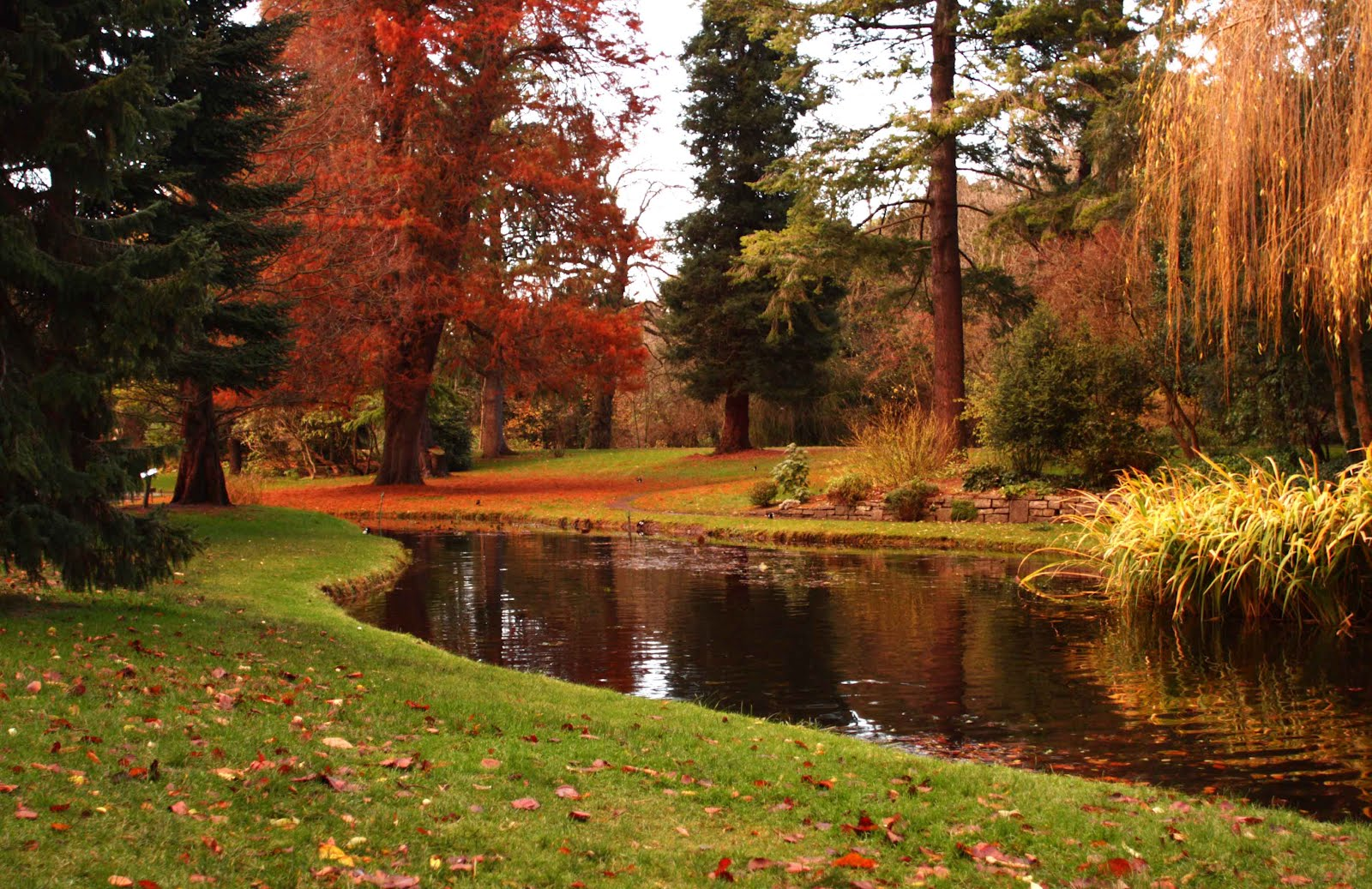 Survival Guide: Dublin with Food Allergies: A Trip to the Botanic ...