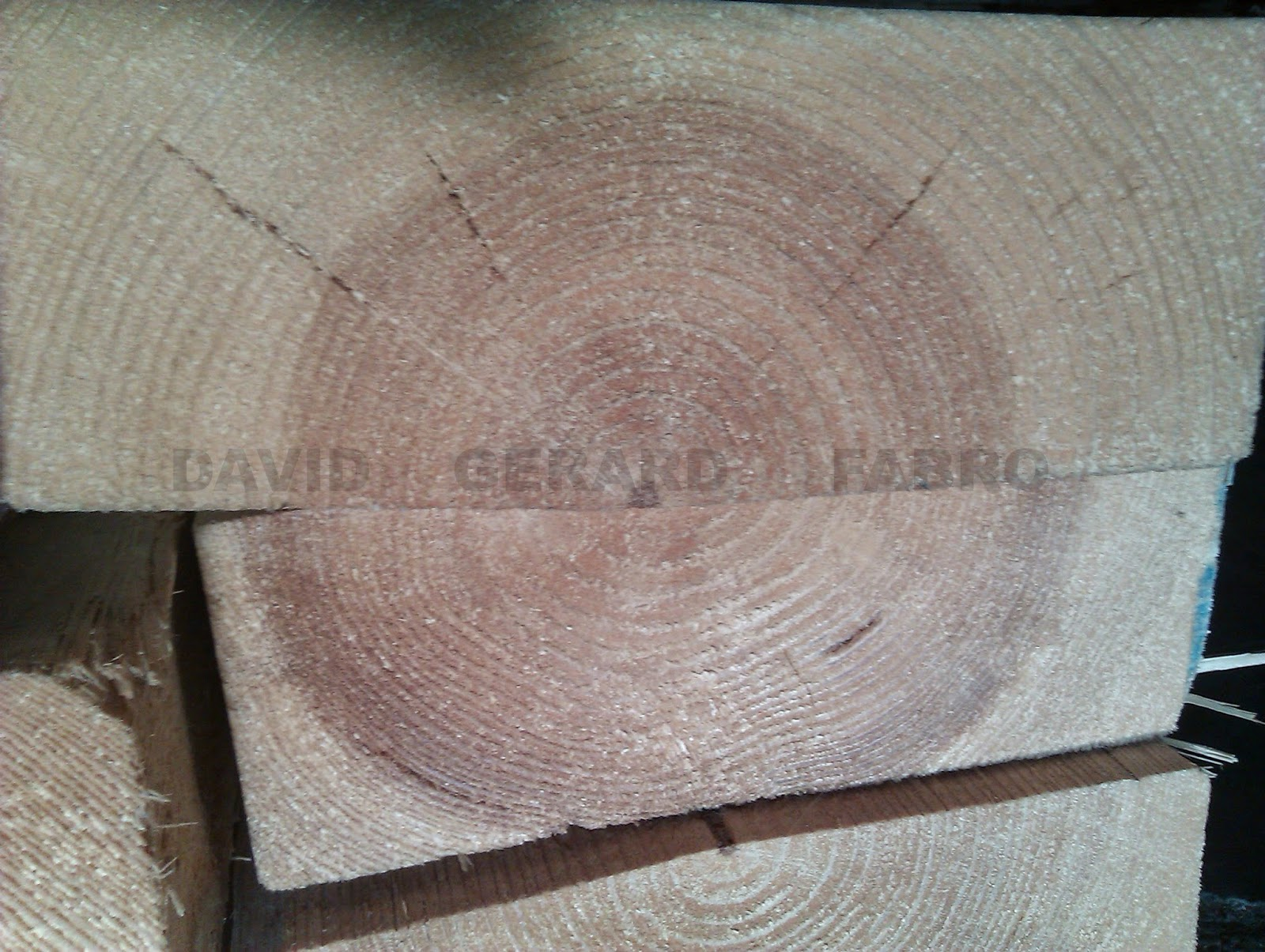 Sección de un tronco de árbol con sus anillos