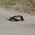 VIDEO: Μαύρο φίδι σε κατάσταση κρίσης...