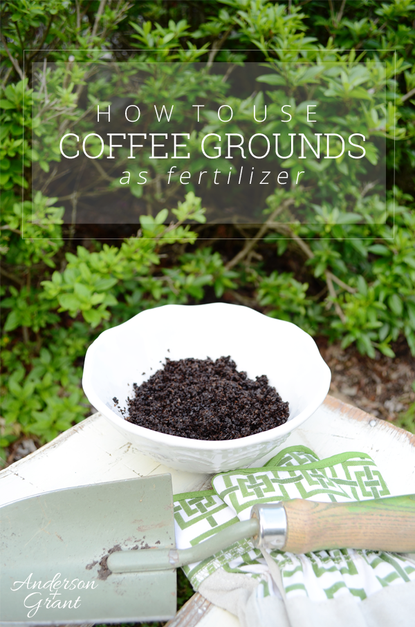 How to use coffee grounds as garden fertilizer anderson grant for How to use coffee grounds in garden