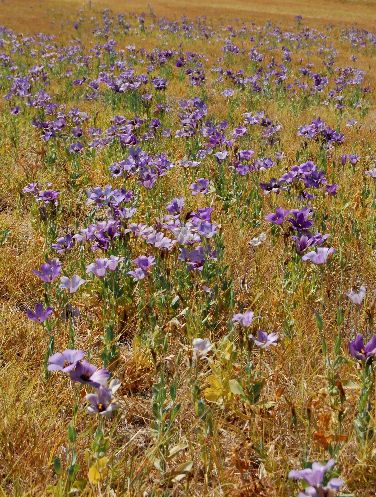Eclectic Design Choices - Designs for Your Life: Texas Native Plant Week