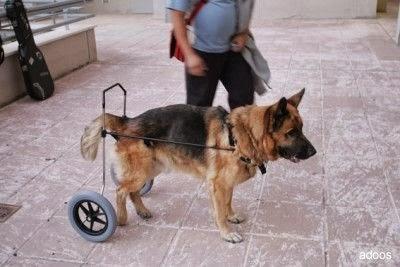 Casita mia cuchas carritos y mas septiembre 2013 for Carritos para perros