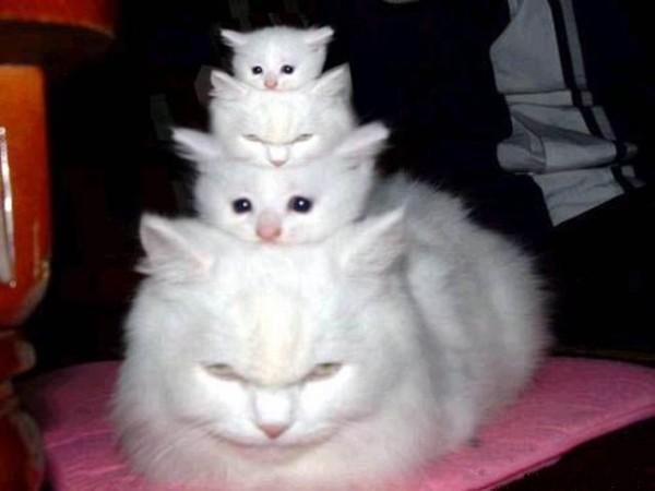 Gambar Kucing Lucu tumpuk