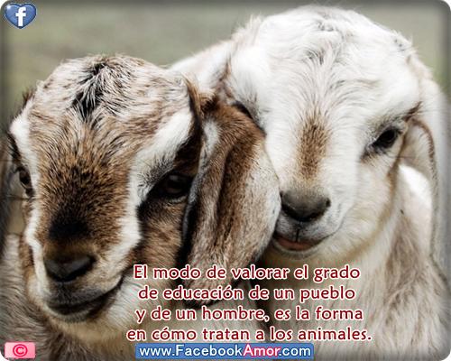 Imágenes bonitas con frases de animales para compartir en facebook