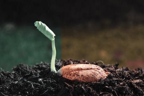 Creced en gracia y conocimiento