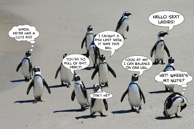 Male penguins going to a party