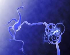 En busca de las neuronas perdidas
