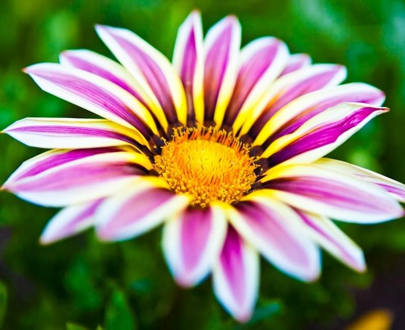 Blooming Flowers Wallpaper   Beautiful Flowers Wallpapers