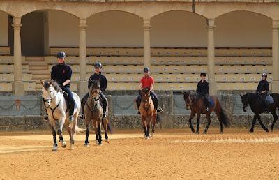 Horses in Plaza de Toros de la Real Maestranza de Caballería de Ronda