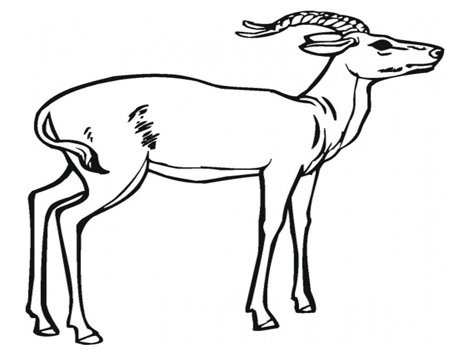 Antelope Coloring Pages Kidsuki