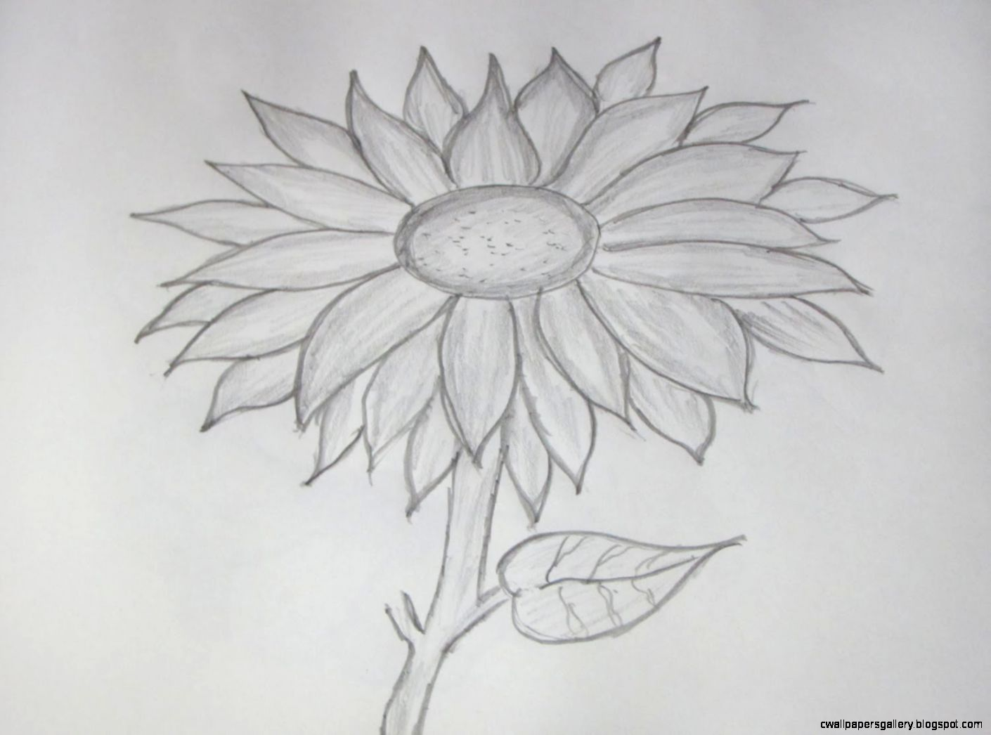 How to Draw and Sketch a Sunflower using Pencil   YouTube