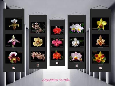 Fotos das Orquídeas no Apê