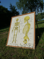 french vintage poster anatomy skeleton used in school