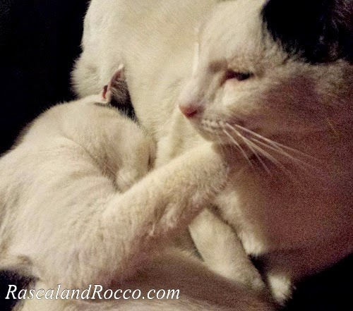 Brothers are for Torturing, Even for #Cats
