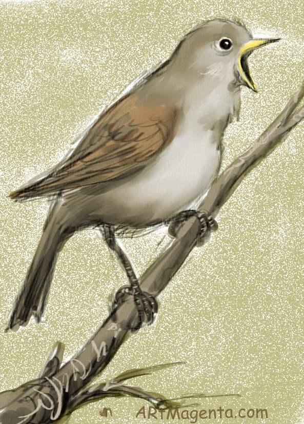 Nightingale bird drawing