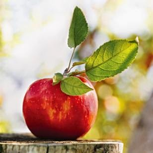 Manfaat Dan Fungsi Apel Untuk Kesehatan