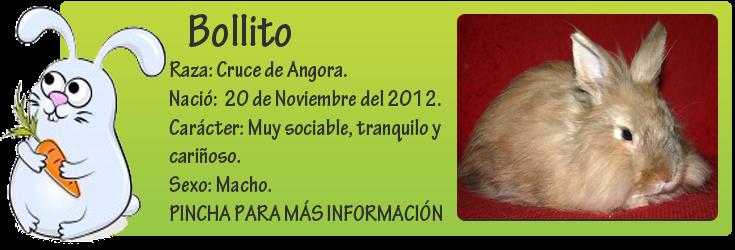 http://mirada-animal-toledo.blogspot.com.es/2014/01/bollito-un-ano-comiendo-comida-de-perro.html