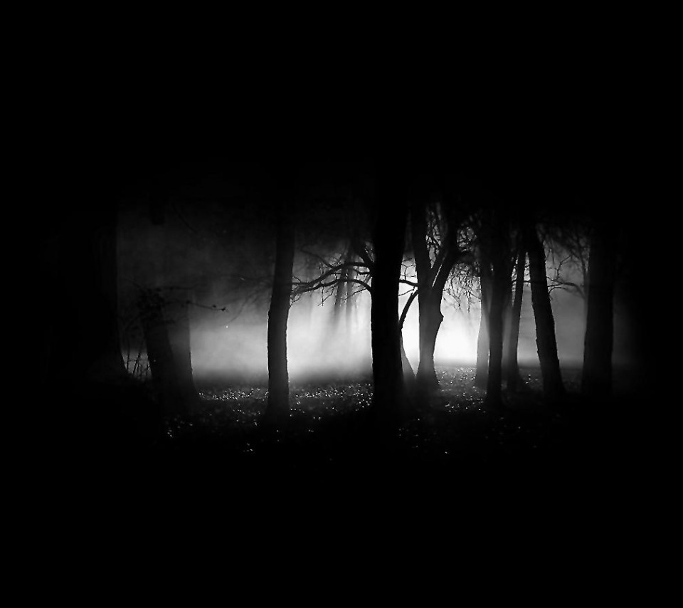 Dark Trees HD Wallpapers