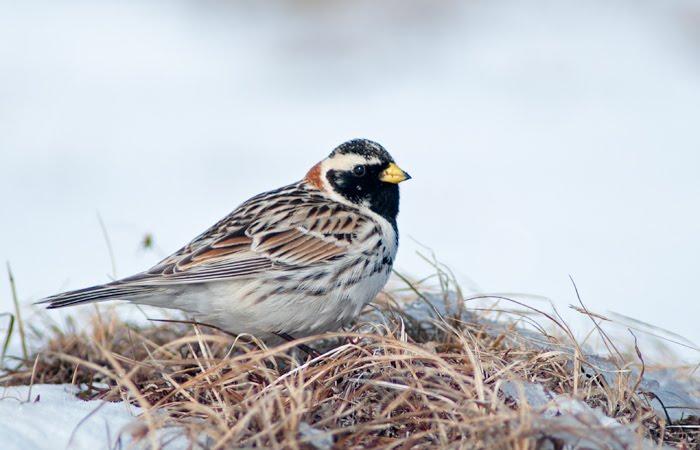 David S Bird And Nature Blog May 2012