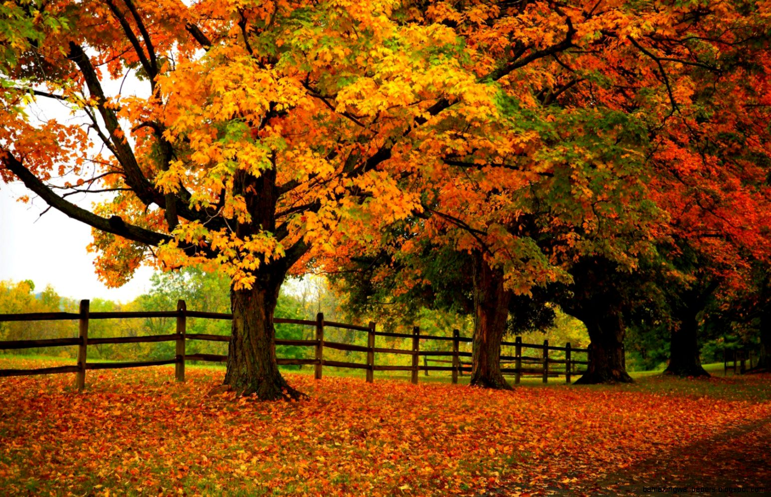 autumn trees forest park uhd wallpapers   Ultra High Definition